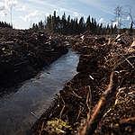 Metsien suojelu suhteettomilta selluhankkeilta elintärkeää