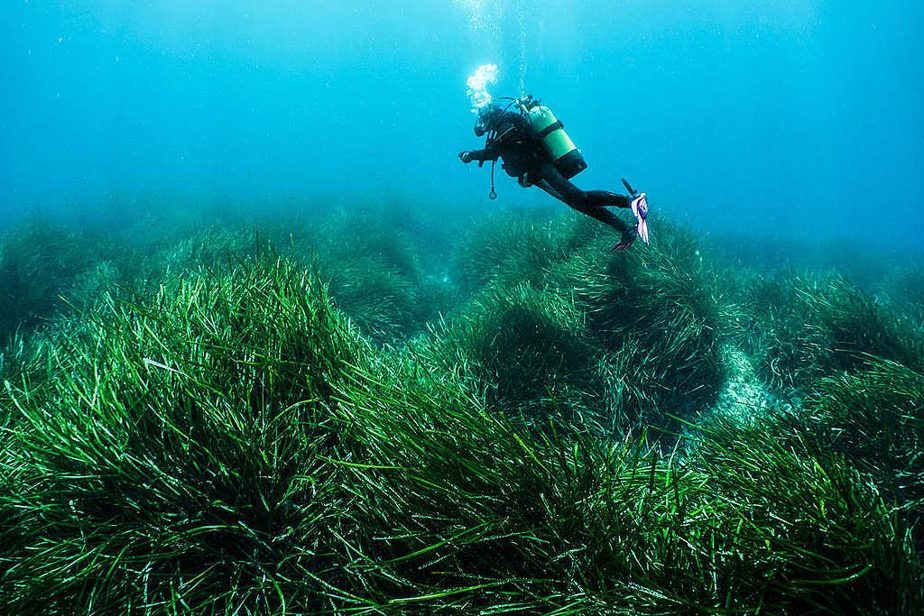 Posidonia-suvun meriruohoa Sardiniassa © Egidio Trainito / Greenpeace