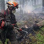Mitä hyvää Venäjän metsille kuuluu?
