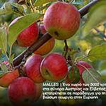 Ένα μήλο την ημέρα… τα φυτοφάρμακα κάνει πέρα!
