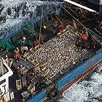 Παγκόσμια αγορά θαλασσινών: λαβύρινθος χωρίς έξοδο;
