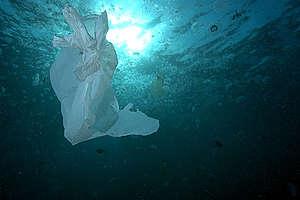 Plastic Bag in Water - Red Sea Coastal Development in Egypt - 2006. © Marco Care