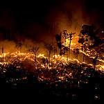 Forest Burning in the Amazon. © Greenpeace / Daniel Beltrá