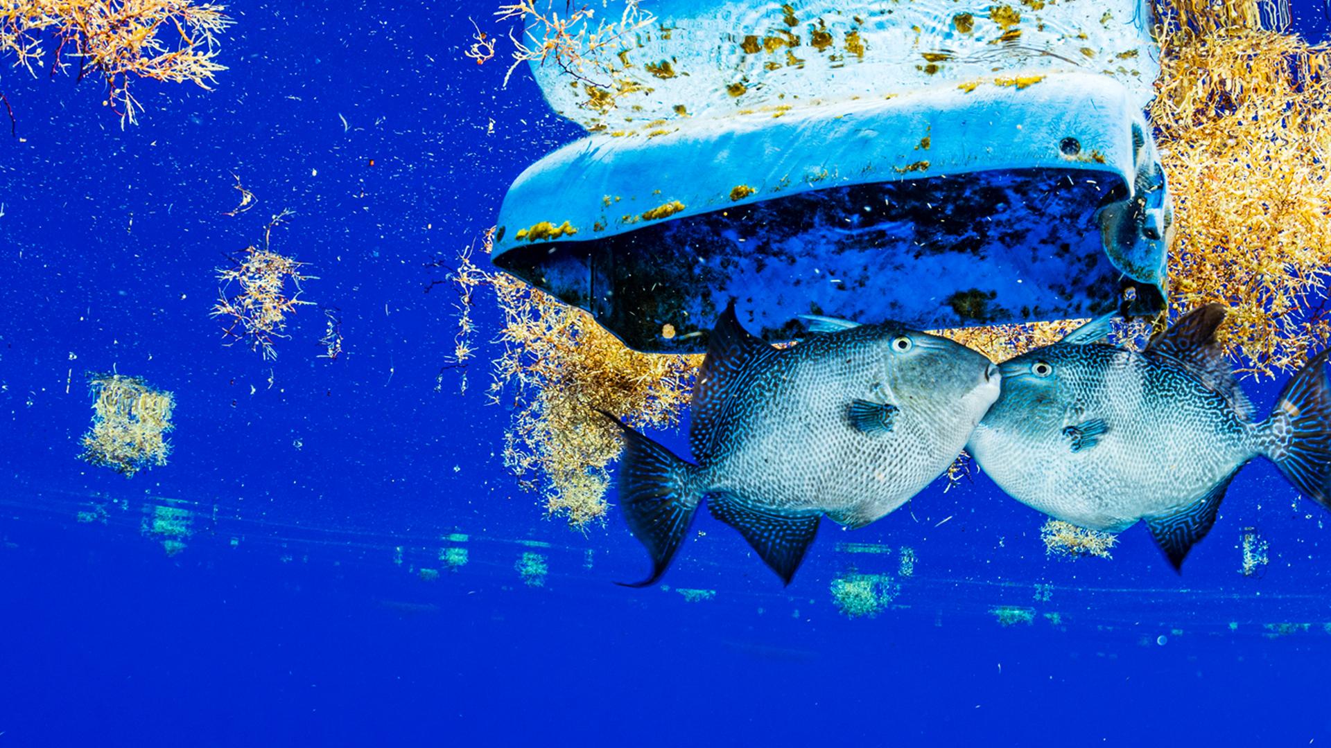 Προστάτεψε τους ωκεανούς μας