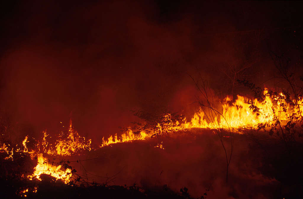 Forest fires in Amazon, Brazil, climate change effects. © Greenpeace / Carlos Hungria