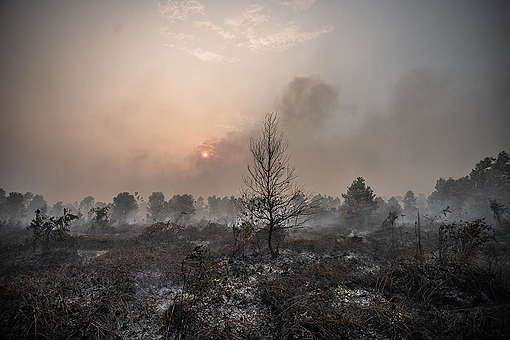Wildfires in Palangkaraya. © Jurnasyanto Sukarno / Greenpeace