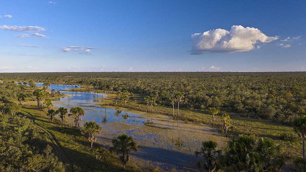 Landscape in the Cerrado Region in Brazil. © Marizilda Cruppe / Greenpeace