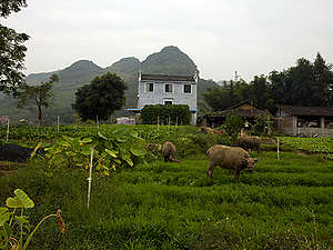 Ecological Farm in China. © Peter Caton / Greenpeace