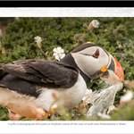Release v2.41 – New image captions (blue caption removed)   Gallery block in WYSIWYG   New rollback method