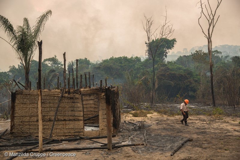 Casa queimada pelo incêndio florestal na Terra Indigena Arariboia, o maior já registrado em terras indígenas no Brasil. Cerca de 45% dos 413 mil hectares do território foram destruídos. A falta de uma política eficaz de proteção das terras indígenas permite o roubo de madeira e aumenta o risco de que incêndios como esses possam se repetir em outras terras, já que a degradação causada pela atividade madeireira ilegal torna a floresta vulnerável ao fogo. 25 de outubro de 2015. Foto: Marizilda Cruppe / Greenpeace.Burned house by forest fire in the Indigenous Land Arariboia. The fire already lasts two months and is the largest ever recorded in indigenous lands in Brazil. About 45% of 413,000 hectares of land have been destroyed. The lack of an effective policy to protect indigenous lands in Brazil allows illegal logging and increases the risk that fires like these can happen in other lands, since the degradation caused by illegal logging makes the forests vulnerable to fire. October 25th, 2015. Photo: Marizilda Cruppe / Greenpeace.