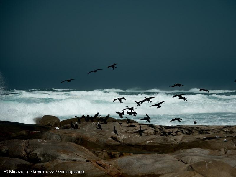 Cormorants taking flight at Smooth Pool Streaky Bay