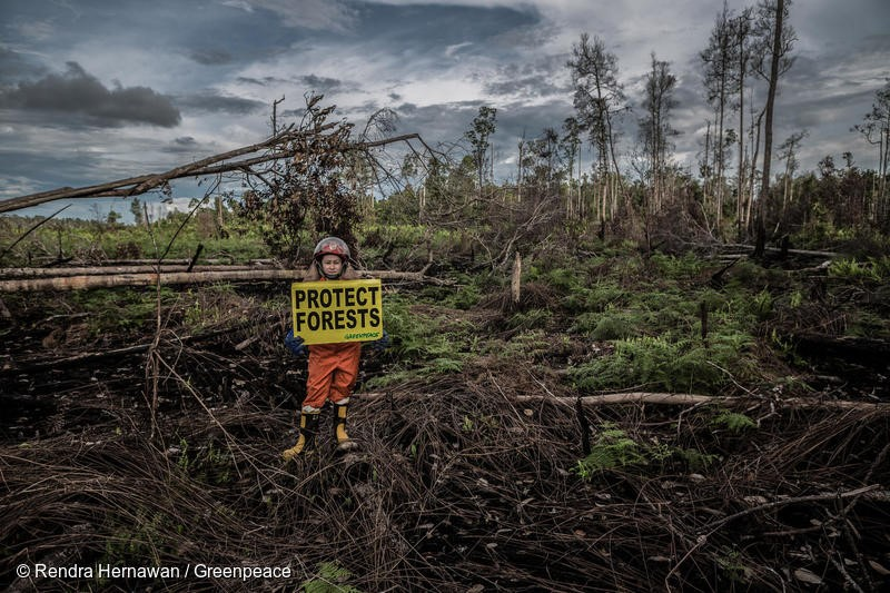 "Greenpeace Indonesia Forest Fire Prevention team Jane Yolanda holds a banner reads ""Protect Forest"" at a fire scar in the peatland, Tanjung Pura village, Ketapang, West Kalimantan."