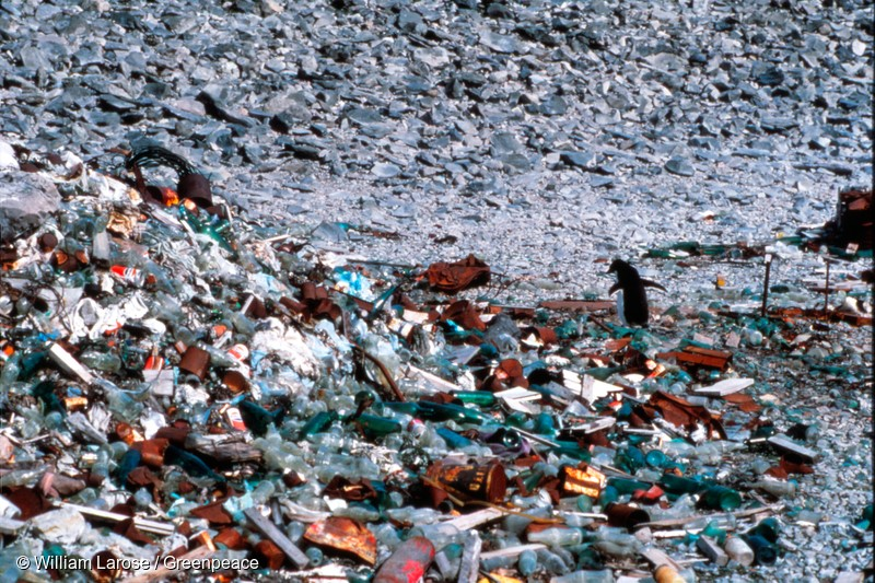 A penguin walks amongst trash and debris near the Argentine Esperanza Station on the Antarctic Peninsula. Antarctica's extremely cold and dry weather causes waste to freeze and remain preserved rather than decay.