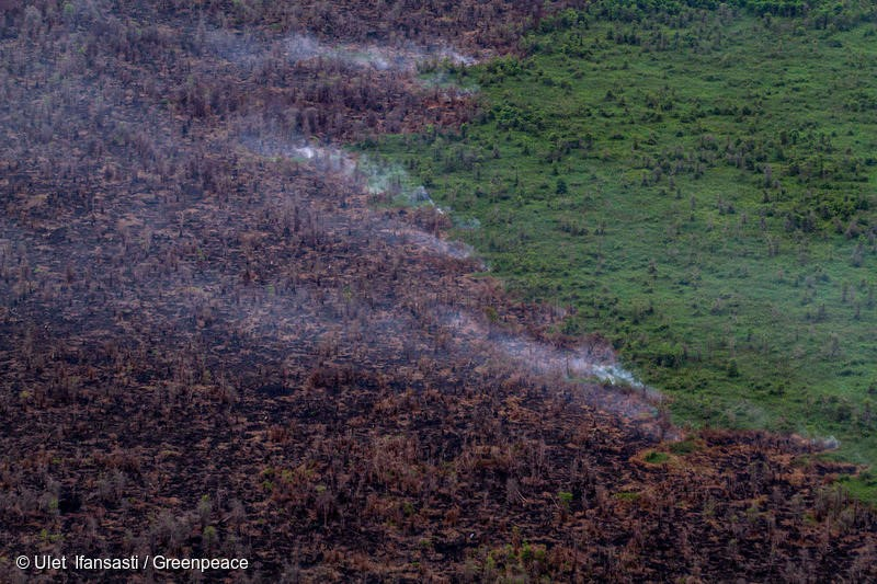 Burnt remains of forest and smoke from continued peatland fires near the PT Berkat Nabati Sejahtera (IOI Group) oil palm concession in West Kalimantan. December 03, 2015. (Photo Greenpeace/Ulet Ifansasti)