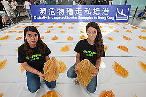 Vaquita Project Action in Hong Kong Airport. © Alex Hofford / Greenpeace