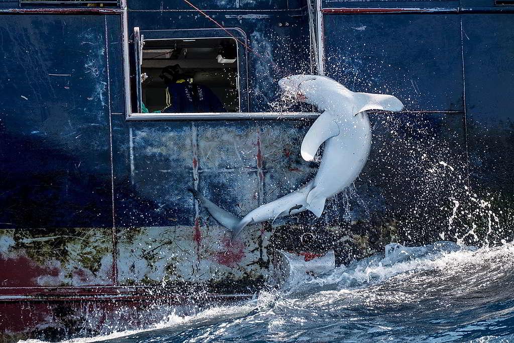 © Tommy Trenchard / Greenpeace