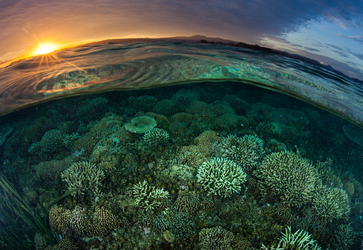 Sunrise Over Reef in Komodo National Park. © Paul Hilton