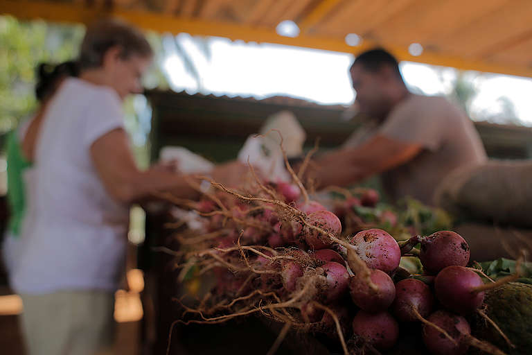 Local Food Market in Cuba. © Alonso Crespo
