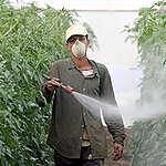 Pesticide Use in Spain. © Greenpeace / Ángel Garcia