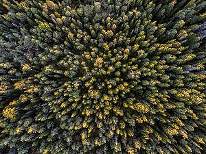 Fiby Urskog Nature Reserve in Sweden. © Christian Åslund / Greenpeace