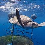 Mi lenne, ha végre fontosságuknak megfelelően bánnánk az óceánokkal?