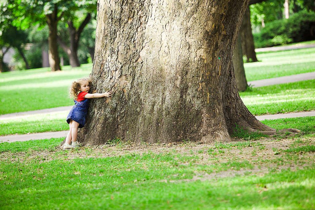 A Városliget fái
