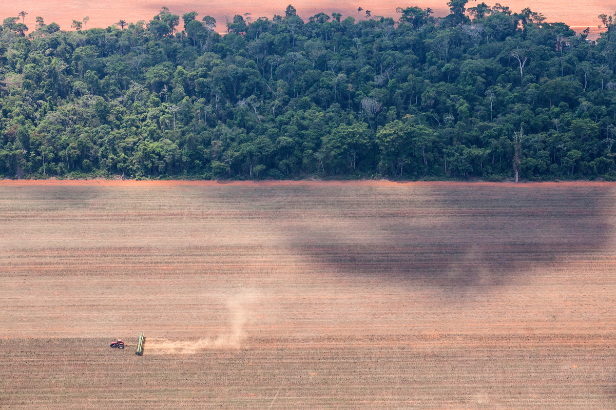 Erdőirtás Mato Grosso-ban. © Paulo Pereira / Greenpeace