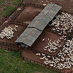 Szarvasmarha-tenyésztő telep Braziliában. © Marizilda Cruppe / EVE / Greenpeace