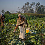 Greenpeace India demands for safe and resilient food systems