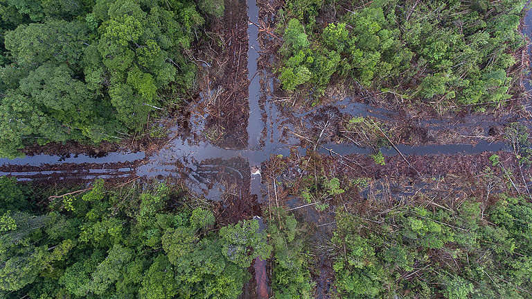 PT Damai Agto Sejahtera Palm Concession in Sungai Putri, West Kalimantan. © Irmawan