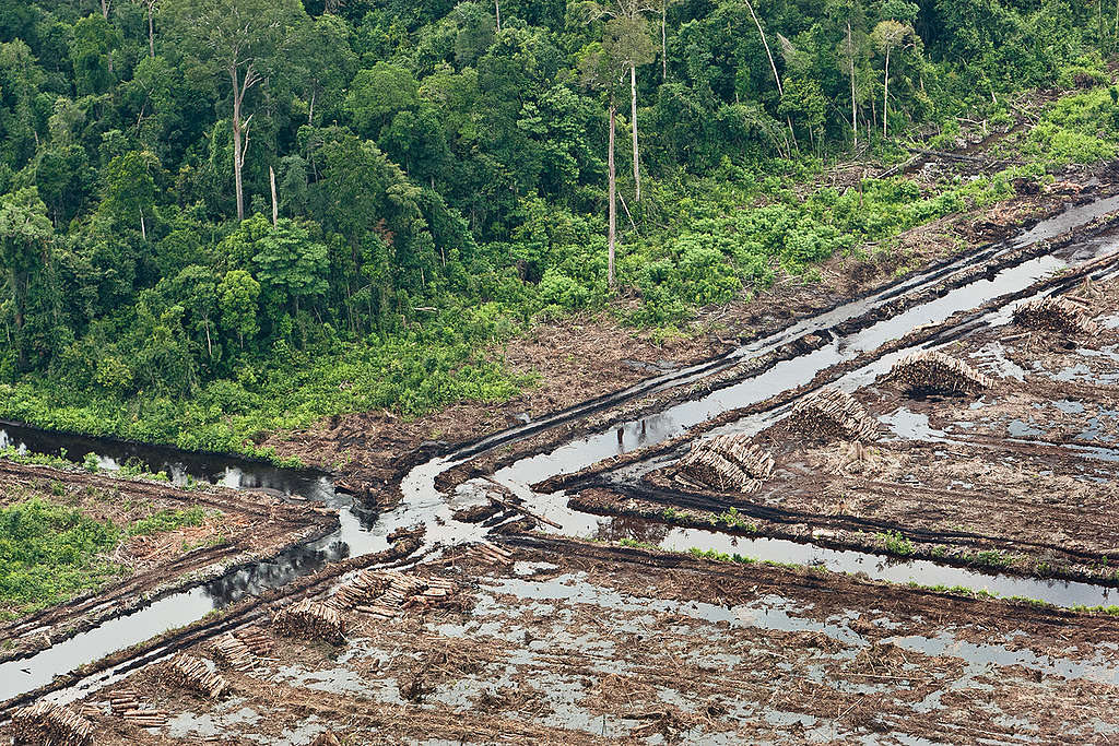 Forest Destruction in Sumatra. © Jeremy Sutton-Hibbert