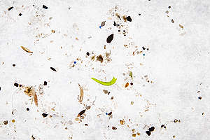 Plastic Waste Found in North Sea. © Will Rose