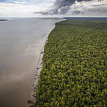 Forest in Southern Papua. © Jurnasyanto Sukarno / Greenpeace