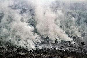Peatland Forest Fire in Pelalawan Riau. © Rony  Muharrman