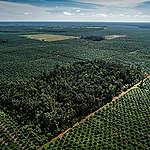 50 Juta Hektar Hutan Dunia Hancur, Sementara Sektor Minyak Sawit di Indonesia Tidak Direformasi
