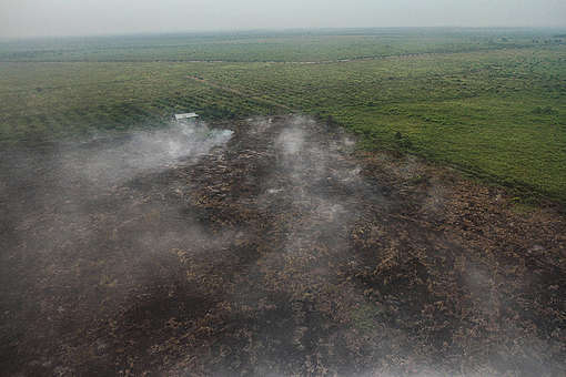 Forest Fires in Riau. © Greenpeace