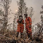Dicari: Forest Campaigner
