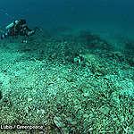 Perlu Aksi Segera Untuk Menyelamatkan Terumbu Karang Spermonde