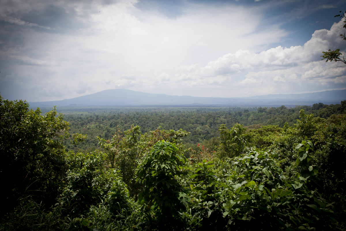 Virunga National Park in DRC © Greenpeace / Jan-Joseph Stok