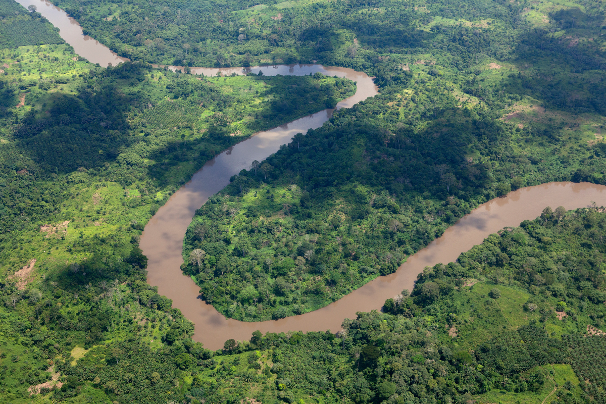 Coastal Rainforest in Cameroon. © Alex Yallop / Greenpeace
