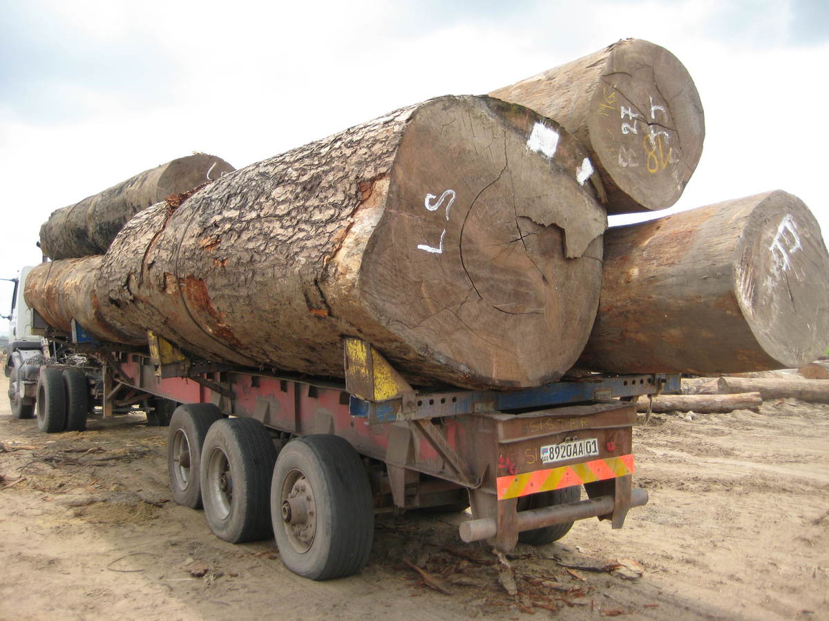Unmarked Timber on Truck in DRC. © Greenpeace