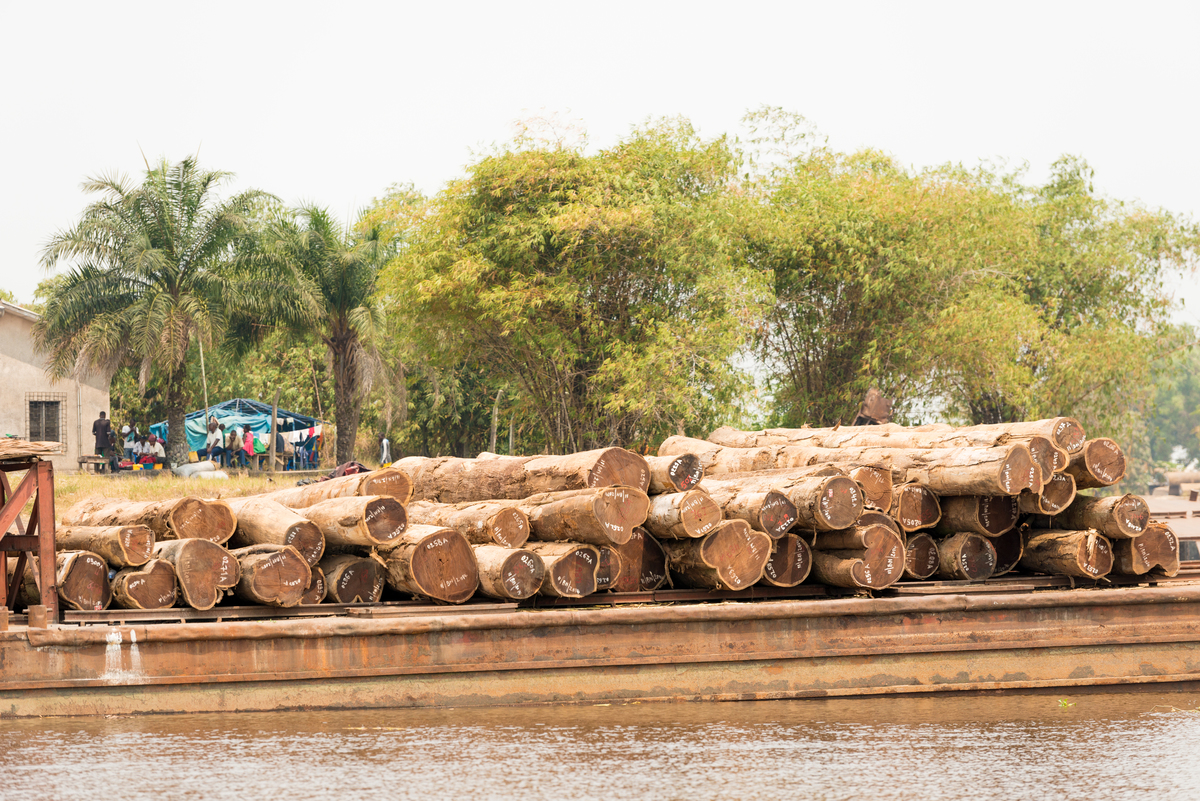 Transportation of Illegal Timber in the DRC. © Clément Tardif / Greenpeace