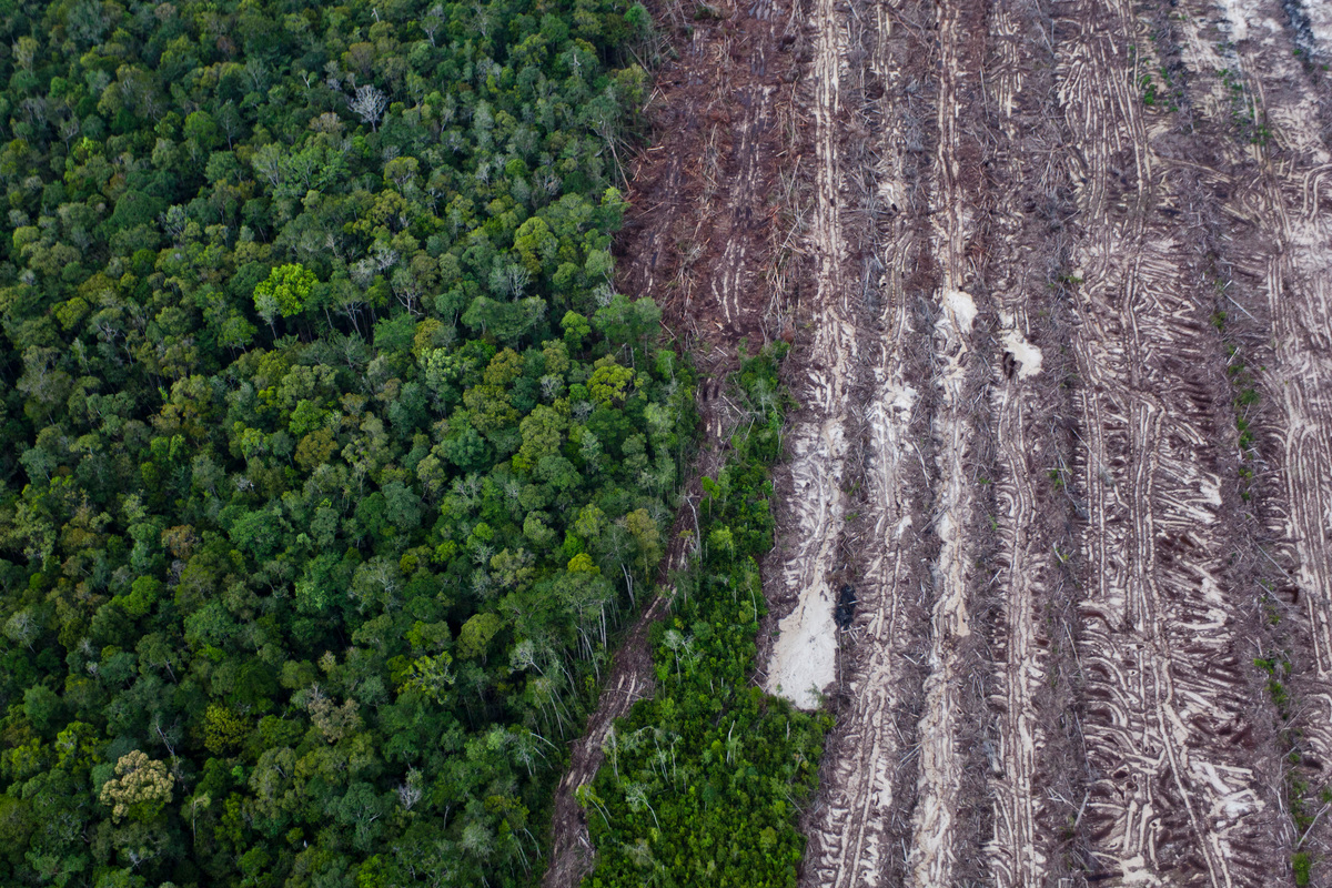 Will Europe lead the way towards 'zero deforestation ...