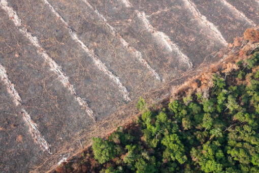 Deforestation in Mato Grosso, Brazil © Paulo Pereira / Greenpeace