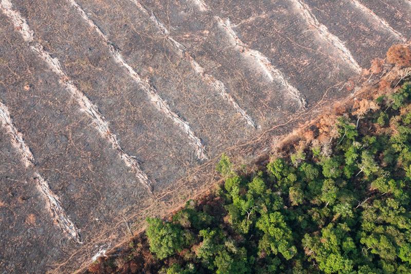 Deforestation in Mato Grosso, Brazil © Paulo Pereira / Greenpeace