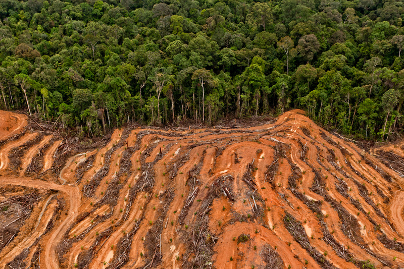 P&G palm oil supplier concession in Kalimantan, Indonesia © Ulet Ifansasti / Greenpeace