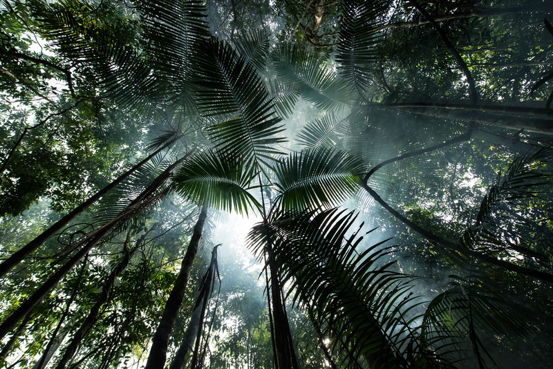 Forest near Tapajós River in the Amazon Rainforest, Brazil © Valdemir Cunha / Greenpeace