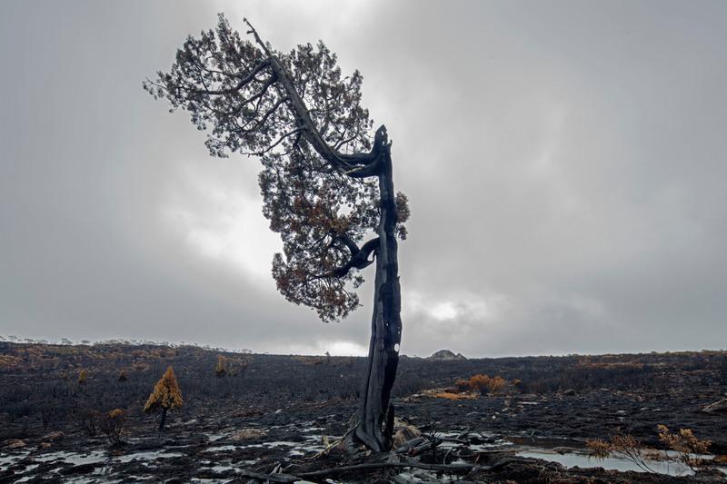 Tasmanian bushfires leave devastation behind © Rob Blakers / Greenpeace