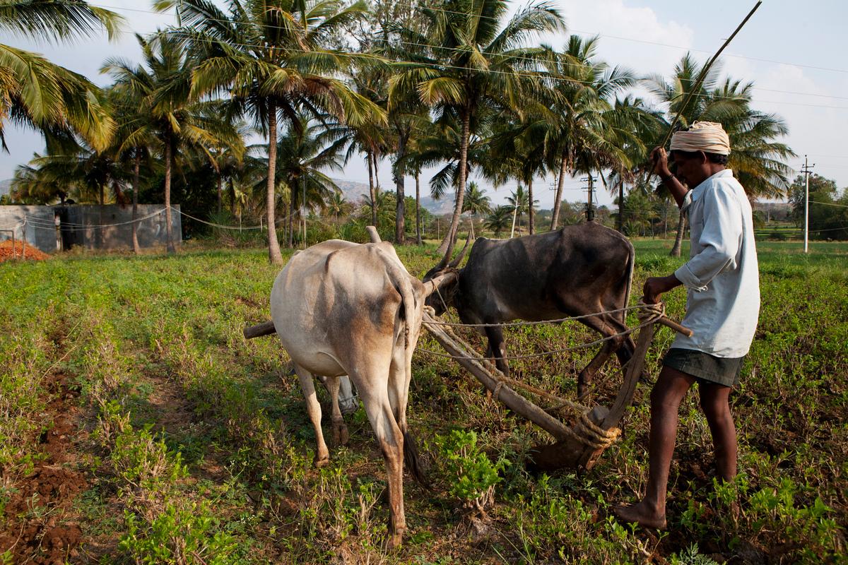 Traditional farmer in Bagepalli © Vivek M.