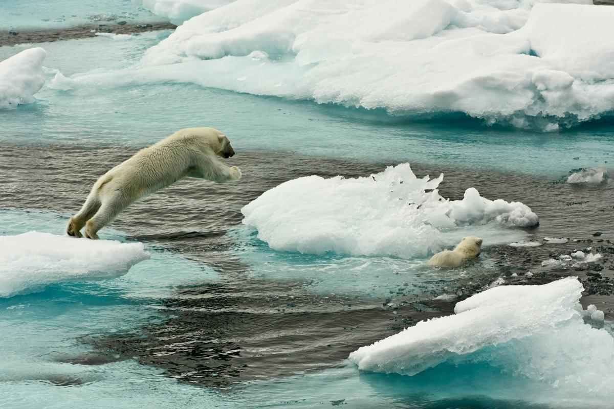 Polar Bears on Sea Ice © Larissa Beumer / Greenpeace
